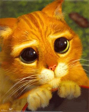 gatito riquiño bonito