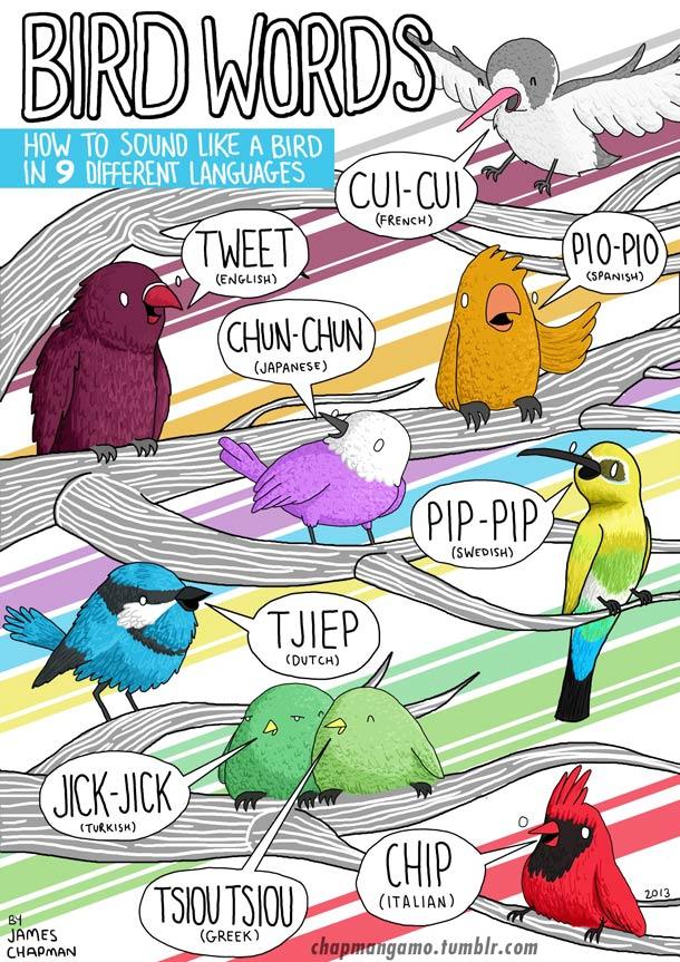 sonido pájaros