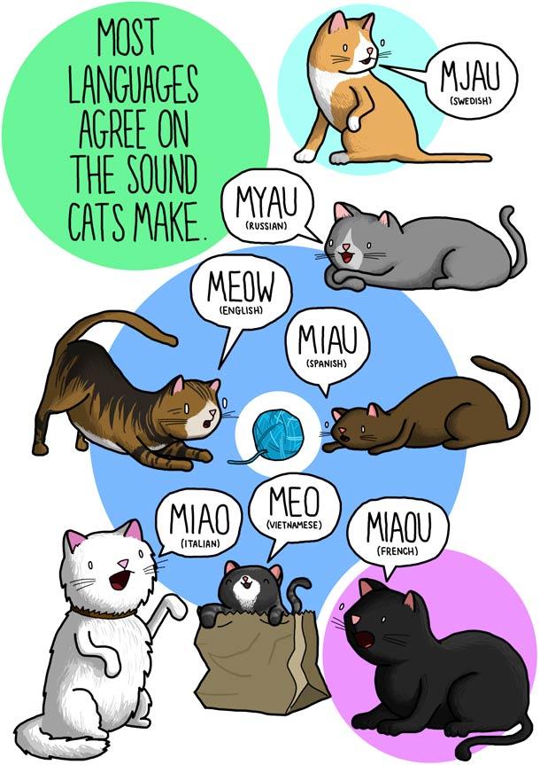 sonidos gatos