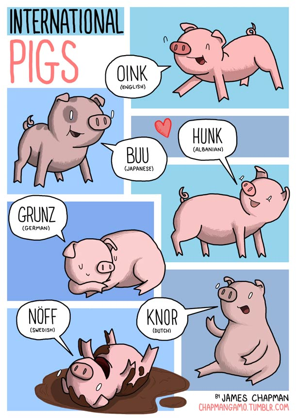 sonido cerdos