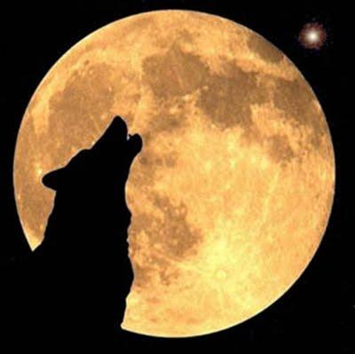 el-lobo-estepario